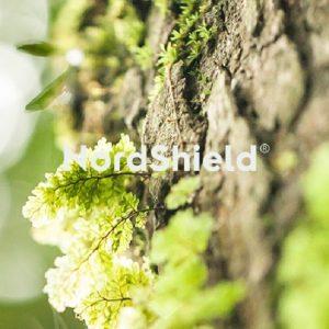 NordShield introduit une technologie anti-microbienne respectueuse de l'environnement pour les fibres