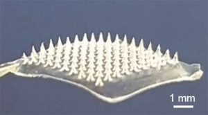 Microneedle patch delivers COVID-19 DNA vaccine, doesn't require cold storage